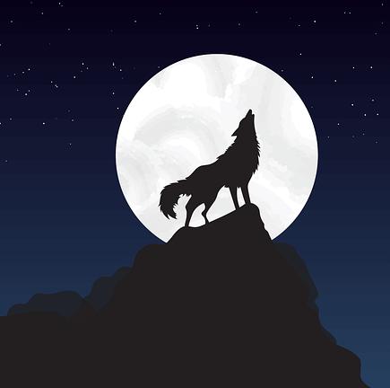 Animal préféré le loup