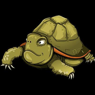 Animal préféré la tortue