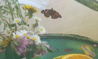 En direct de la chenille au papillon