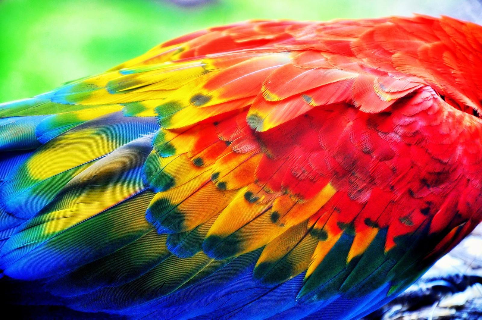 Mettez le monde en couleurs