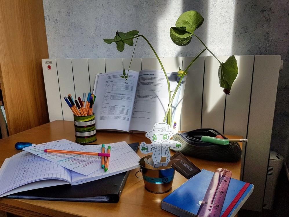 Les haricots poussent rapidement pour le plus grand bonheur des élèves !